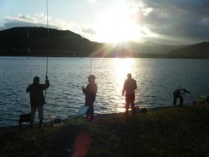 井沢で鰯釣れています。